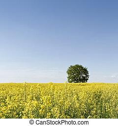 Canola Field with tree