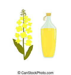Canola flower. Bottle of rapeseed oil. Rape plant