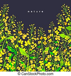 Canola flower field. Vector border. Oilseed plant - Canola ...