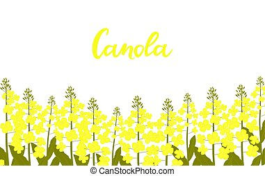 Canola hand drawn lettering. Rapeseed grows in a meadow.