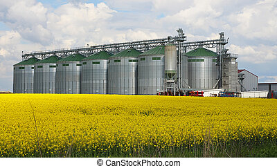 Rapeseed field and silo at farm