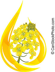 Canola oil. Stylized drop of oil and rapeseed flower. Vector...