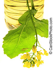 flowering canola plant with vegetable oil before a white background