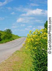 canola, por, estrada