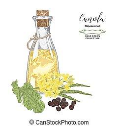 Canola, rapeseed oil hand drawn. Colorful rape flowers, ...