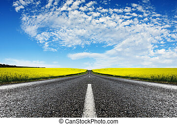 Canola Road - Road travelling through a Canola Field