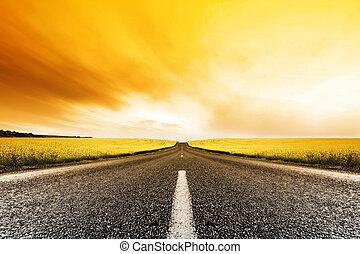 canola, route, coucher soleil