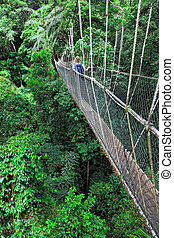 canopy bridge