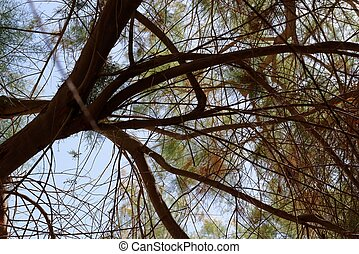 Canopy of a tree branches leaves on sky background