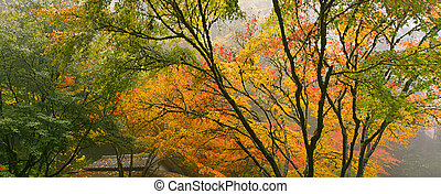 Canopy of Japanese Maple Trees in the Fall