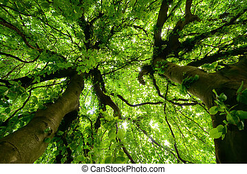 Canopy of two very characteristic trees