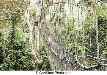 Canopy walkway in Kakum National Park, Ghana
