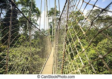Canopy walkway in Kakum National Park Ghana West Africa & Canopy walkway in kakum national park ghana. Canopy walkway ...