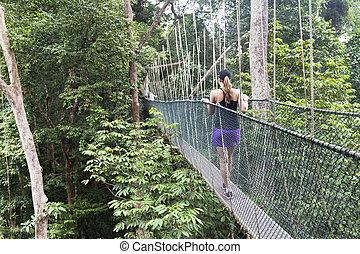 Canopy walkway. Taman Negara & Canopy walkway Taman Negara National Park Malaysia stock photo ...