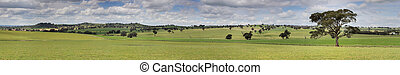 Canowindra Pastoral Countryside Landscape Panorama - The...