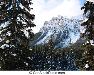 Mountain Forest - A snow covered mountain forest