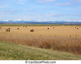 Mountains and Bales - A picture of a field of bales in the...