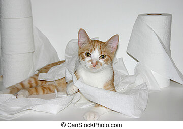 naughty kitty - half grown kitten playing with toilet paper