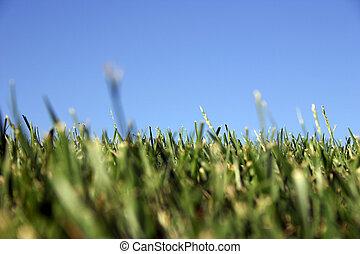 Grass Sky - Sky grass