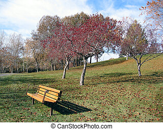 bench and flowering tree - A nice fall picture with red...