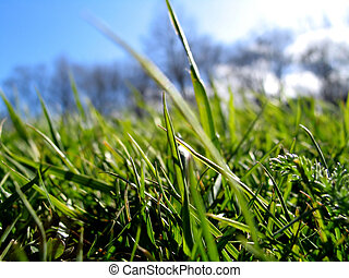 Green Grass - Macro of fresh green grass blue sky and trees...