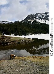 Spring Thaw - Spring thaw in the Rocky Mountains