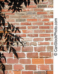Shadows on Brick - Shadow of tree branches on a brick wall