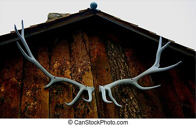 antlers 5152 - An antler rack mounted on the Rudd cabin, one...