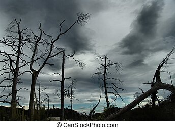 Pollution - Dead trees silhouetted agains a stormy sky, but...