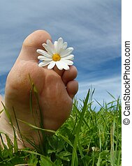 Summertime2 - Foot w/daisy. Vertical orientation