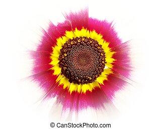 Center of Chrysanthemum