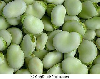 Broad Beans macro