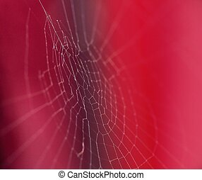 Cobweb - Spiders web on red background. Focus on the center.