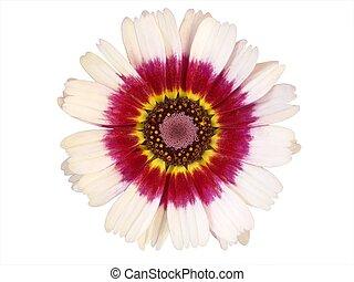 꽃 스톡 사진 이미지. 1,898,770 꽃 저작권에 구애 받지 않는 사진은 ...
