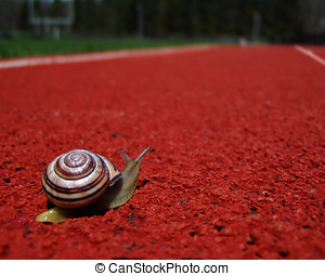 100 Yard Dash - I have pet snails - lots of them! This one...