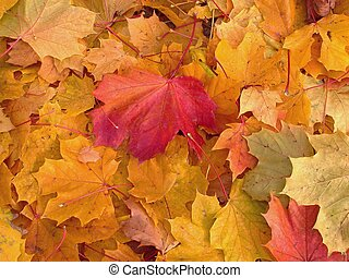 Autumn Leaves - Autumn leaves in park