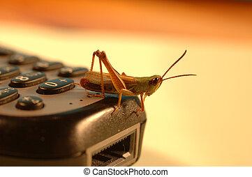 mobile grasshopper - a grasshopper sitting on mobile phone