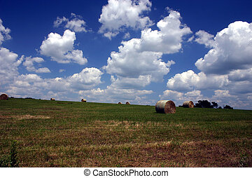 Summer on the farm - A photo of pasture recently cut and...