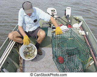 Blue crabs - One of many delectable types of seafood...