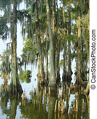 Cypress Swamp - The Edge of a bald Cypress swamp in southern...