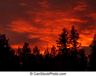 Burning Forest - Sunset over the forest