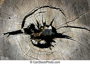 Hollow log - An example of nature's design work with cracks...