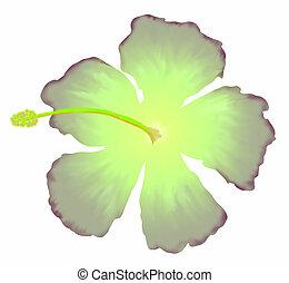 Hibisco, verde