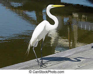 Crane - A white crane and very common across North America