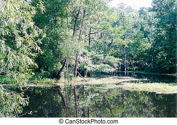 Bayou Coquille - A back water bayou deep in the Jean Lafitte...