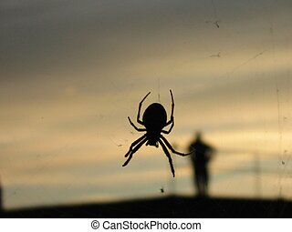 Spider silouette - Picture of a spider with a silouette of a...