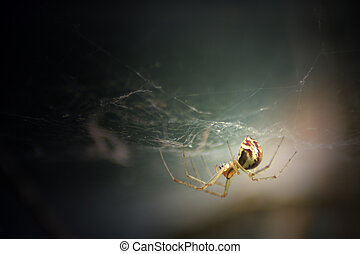 Illuminated Spider - A spider hanging from its web