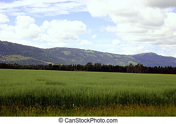 Farming in Idaho - A typical farm scene in northern Idaho...