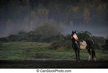 Misty Morning - Pinto on an early fall morning