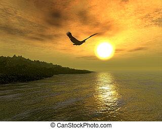 鷹, 海岸